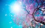 spring-blossom-sunshine.jpg