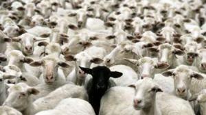 10370-0-cierna-ovca-rodiny